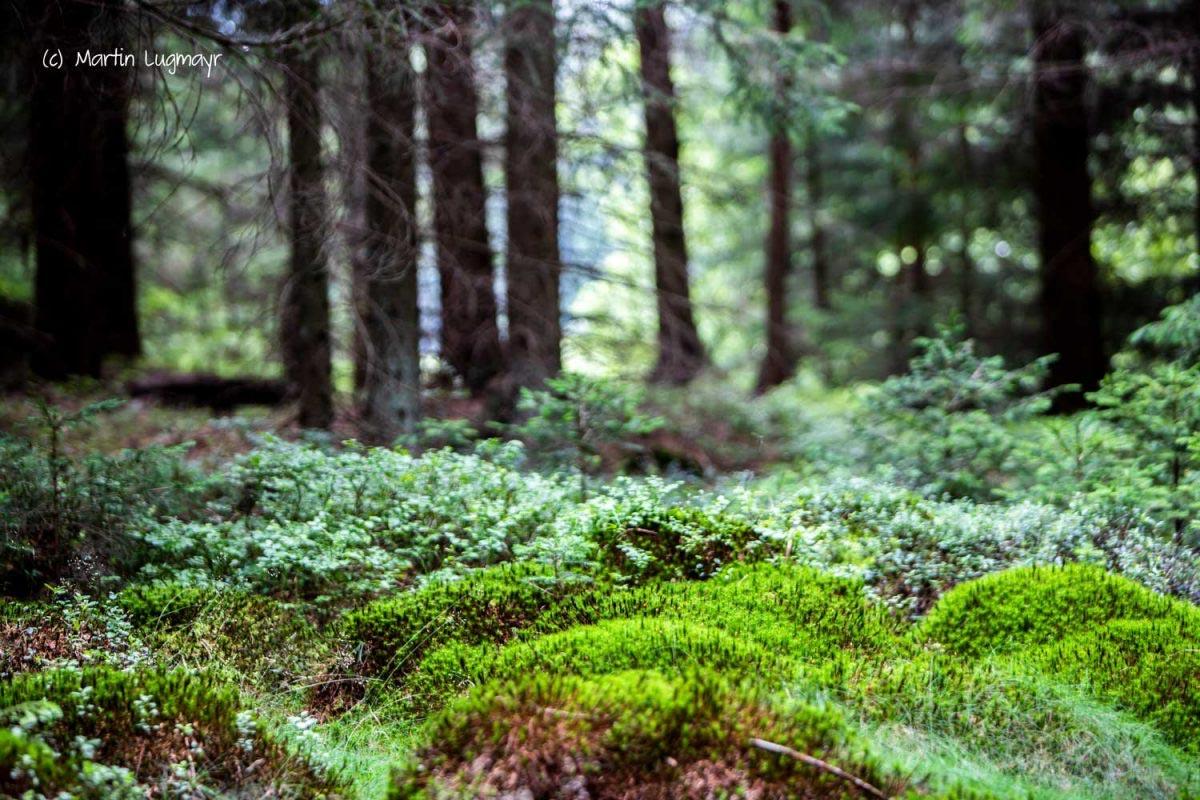 UrlaubsREICH Wald